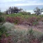 P-P Site Pre Bush Regeneration